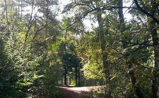 Nieuw! Vrijspel in het bos voor ouders en kinderen
